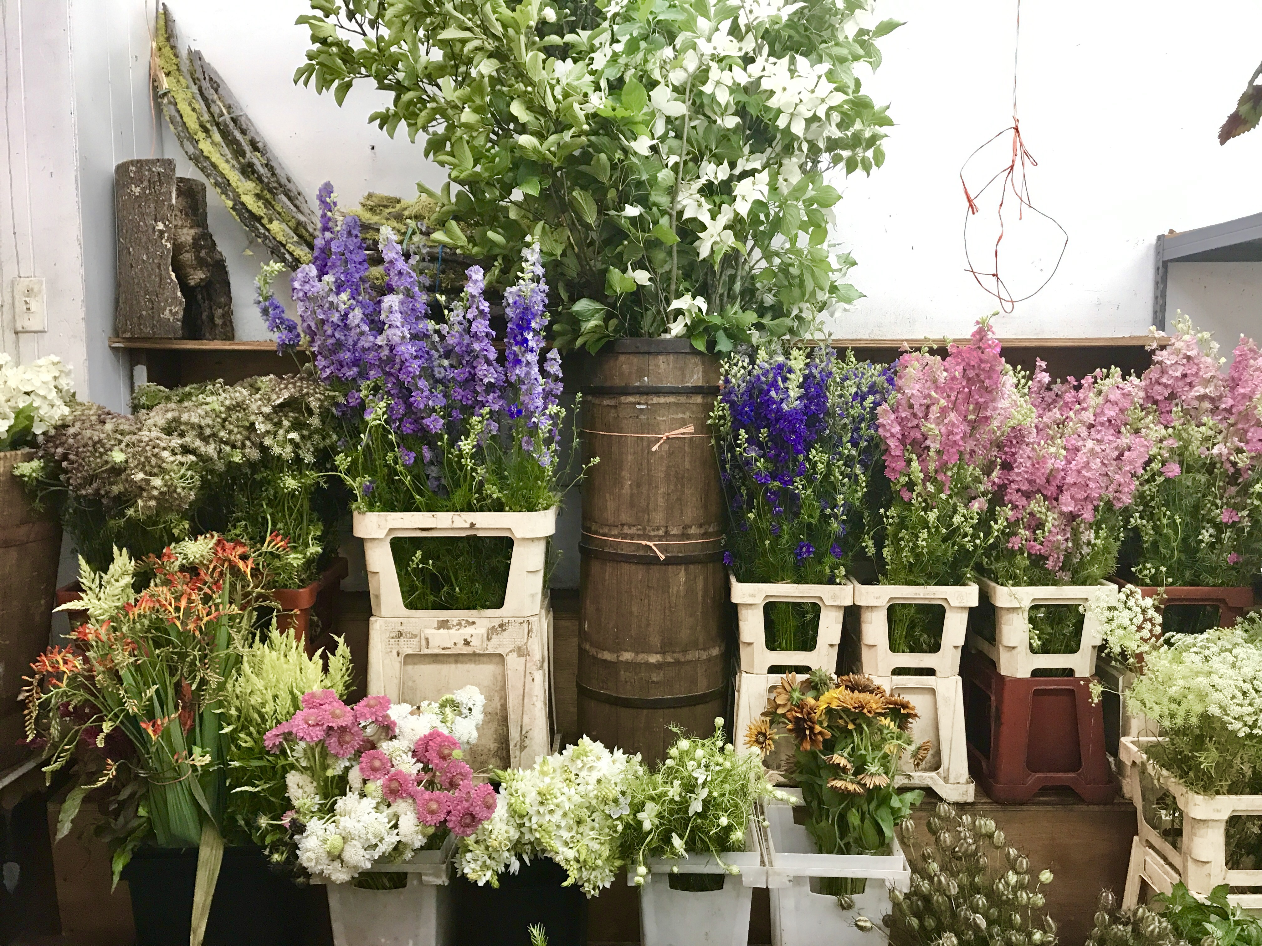 SPEND A MORNING IN THE CHELSEA FLOWER MARKET